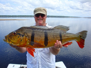 24 lbs Peacock Bass on the Rio Negro South America Bass fishing trip
