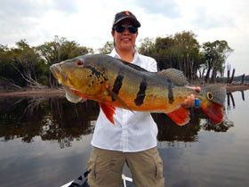 Stefanie Hada's 1st trip to the Amazon produced this 20lb peacock!!